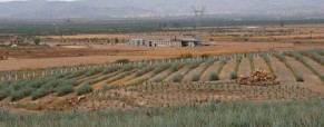 Tequila Industry in Mexico Going Green
