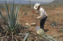 Tequila Grows Up and Gets Real