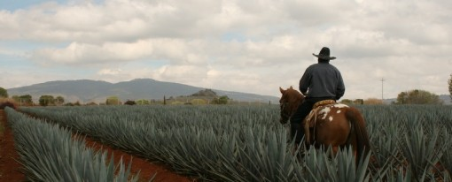 Authentic Tequila Celebrations in Mexico