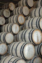 oak barrels (baricas) are used to age tequila at agabe tequilana