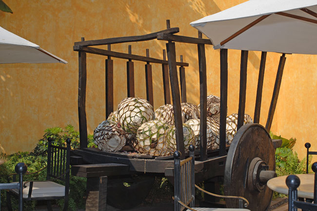 Tequila Distillery Tours - Jalisco, Mexico