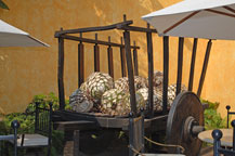 old cart with agave hearts at the jose cuervo distillery in tequila, jalisco